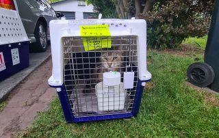 tabby cat in a crate